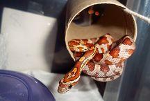 Prissy the Python / by Laura Heilman