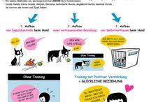 Hundetraining / Hundeerziehung