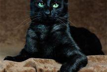 15 BLACK CAT