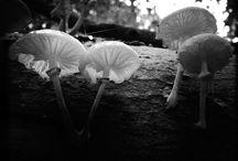 Nature Photography by Anjuska Slijderink