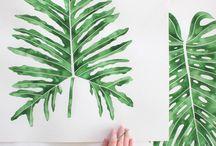 Tropical Plants Illustrations