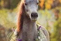 koně *-*horses
