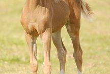 Horses / Hästar