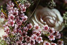 Fleurs / by Kelly Gulbrandsen