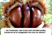Castanyes / Castañas  / Aquí trobaràs curiositats sobre les castanyes  / Aquí encontrarás curiosidades sobre las castañas