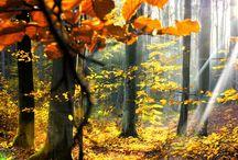natura • ipse.pl