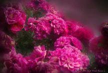 Flowers / A hatalmas természet kicsiny szépségei.