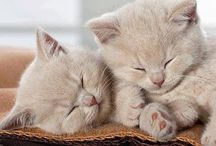 Kediler / Bir kedi istiyorsanız ama alamıyorsanız mutlaka büyüyünce alın(bu tavsiyeydi)