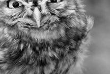 Oh god Owls !!
