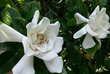 Beautiful flowers / by Silvia Valldeperas