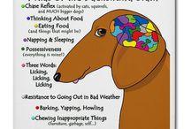 I Love Wiener Dogs!