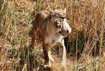 9 reasons why I will rush to Dinokeng Game Reserve again