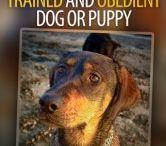 Dog behavers