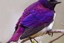 Kuşlarhbv