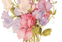 Blooming Beautiful / Flowers & plants which catch the eye & capture the soul of gardeners