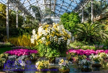 Orchid show displays / TQOS