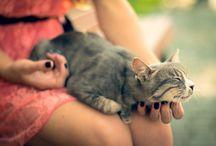 Animals / О животных, о чём ;)))