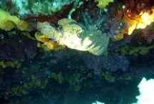deep / deniz temizliği