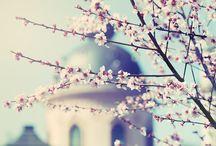 Magnolia / Toute la fraîcheur de la magnolia déclinée à travers des notes citronnées, pétillantes et rafraîchissantes.
