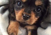 Extremly cute pets