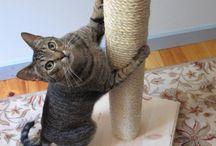 Kitty cat ❤