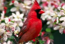 Birds we have in our backyard! / by Holly Phillips