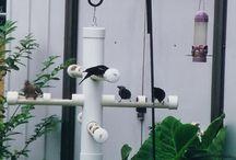 cebaderos para aves