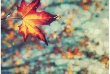 DREAM, SKY & FLOWERS