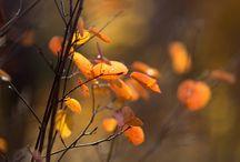 Hazan mevsimi