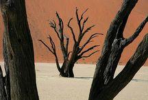 Desert Dune trees
