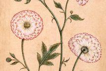 Botanical (Old Design)