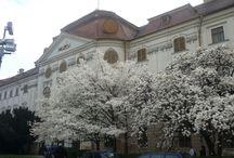 Oradea - Stiri si informatii din Oradea