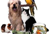 Pets best food and training / PETS best foods Pets food pets all you want to now sitemap for more http://www.pets.highprofitwebsites.info