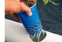 planting og vanning
