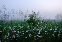 - floral -