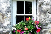 """window / """"A leaf fluttered in through the window this morning,as if supported by the rays of the sun"""" Anais Nin / by Gretel"""