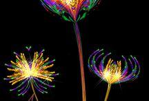 λουλούδια gifs αστραφτερα
