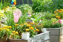 Veggie patch / Gardening