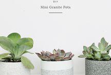 decoraçao plantas