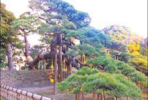Japan_Gardens-Forests