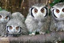 Owls / by Bjørg Kirsn Enano-Storli