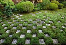 Garden / by Kazutoshi Kurihara
