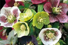 Rośliny Ozdobne / Zapraszamy do zapoznania się z ofertą naszego sklepu ogrodniczego.