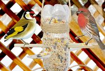 Comida Pássaros