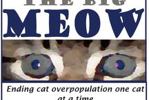 The Big Meow / A no costs spay and neuter program for outdoor non feral free roaming friendly cats