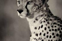 #wild life
