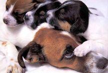 Pejsci, psi, hafani, dogs / Pejsi všech ras a velikostí, štěňata