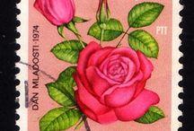 Selos Rosas