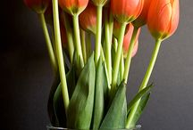 TULIPS TEMPT ME / by Teresa Powell