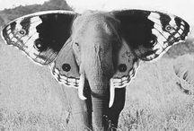 djur ❤️❤️
